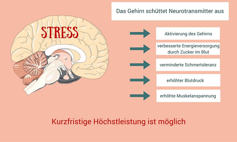Grafik die zeigt, dass das Gehirn im Stressfall Neurotransmitter ausschüttet und stellt die Konsequenzen dar